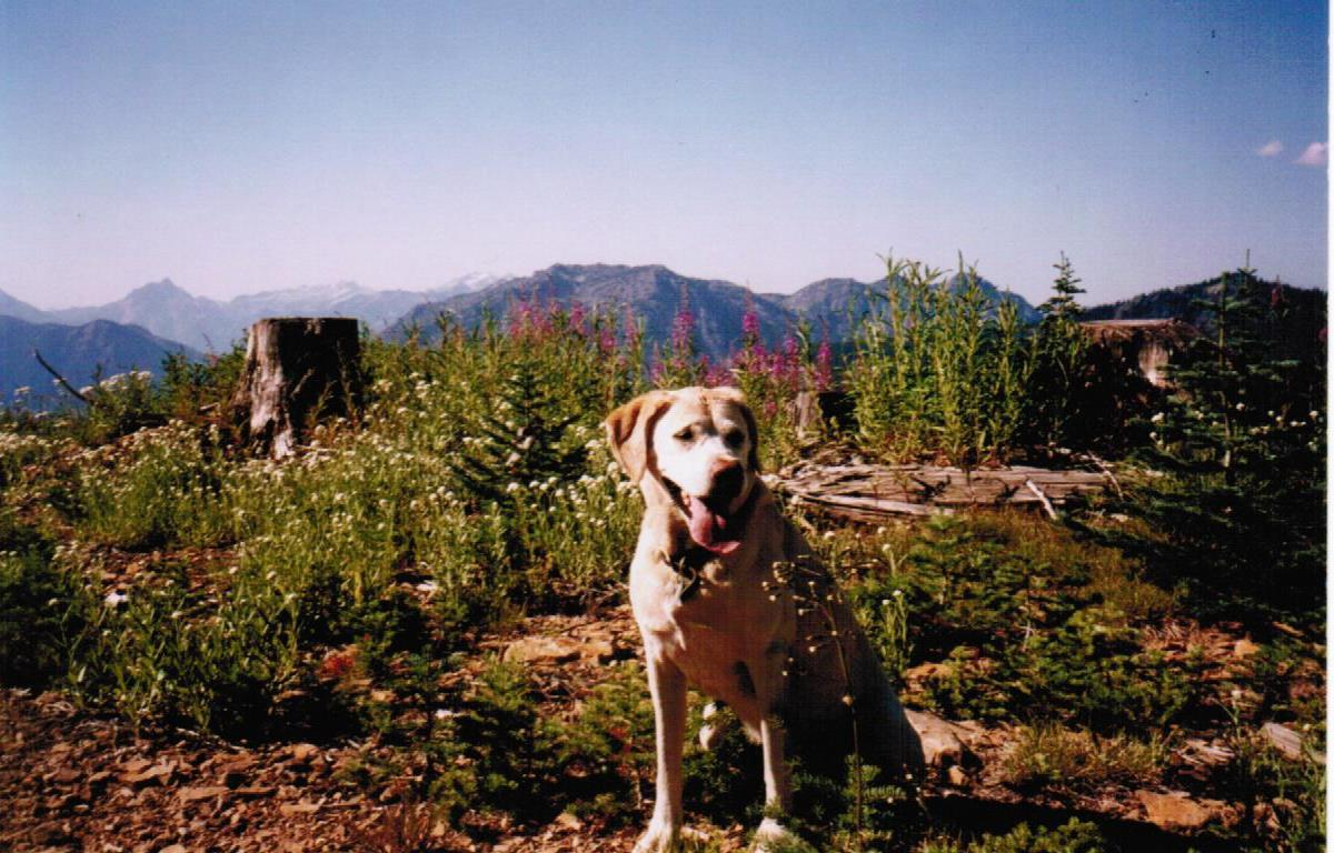 Shelby in Whistler